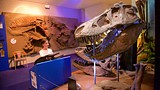 Showing item 48 of 80. National Dinosaur Museum - Canberra - Tourism Media