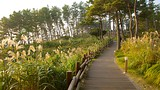 Olle Walking Paths - Corea del Sur - Tourism Media
