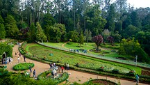 Botanical Gardens - Ooty
