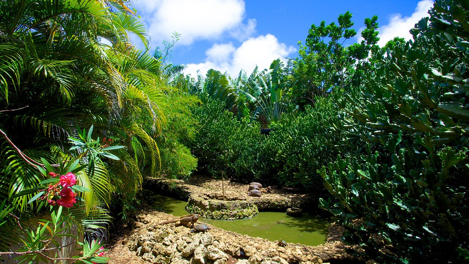 Barbados Wildlife Reserve In Speightstown Expedia