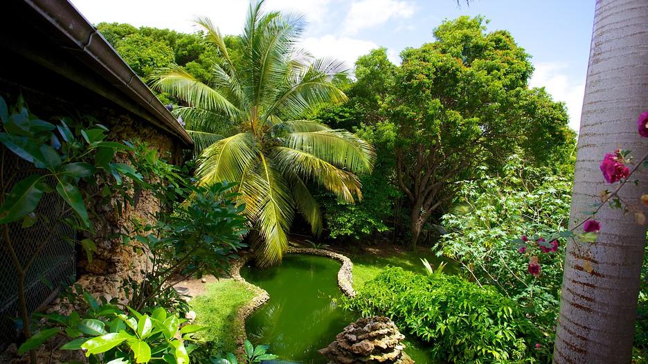 Barbados Wildlife Reserve In Speightstown Expedia