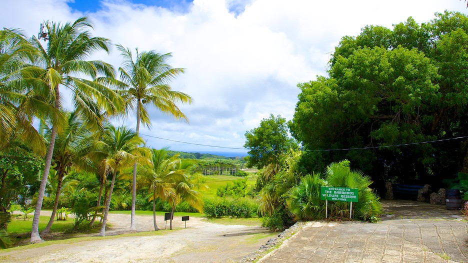The best things to see in Barbados