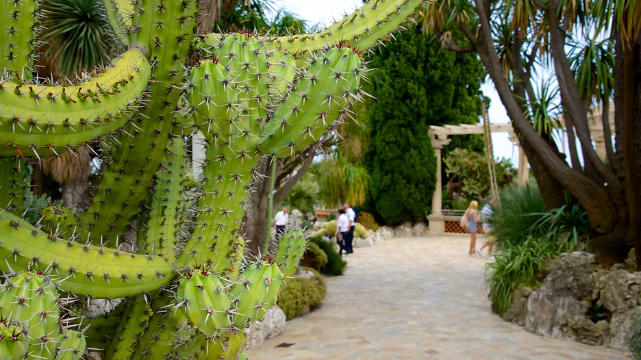 Exotic garden in monaco for Jardin exotique