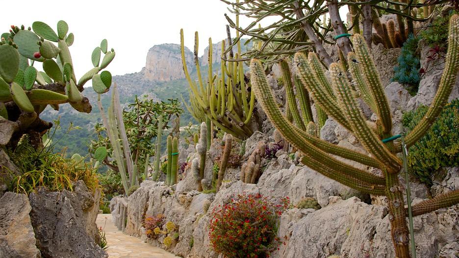 Jardin Exotique Of Exotic Garden In Monaco