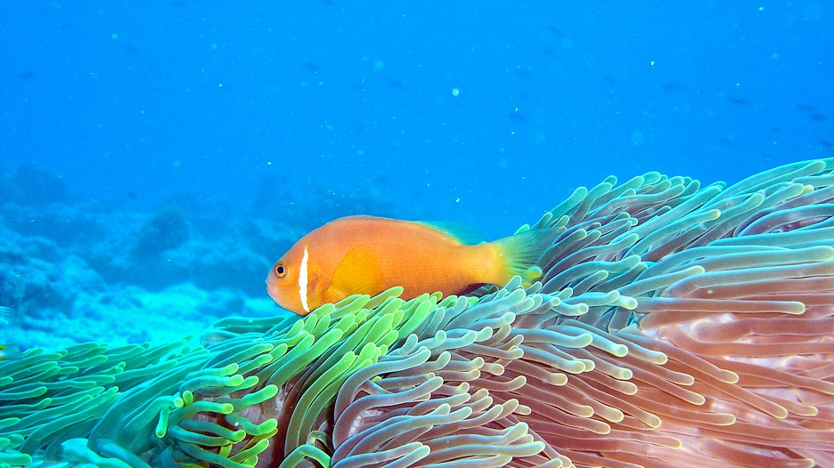 Maldives Holidays 2017 Find Cheap Packages To Maldives