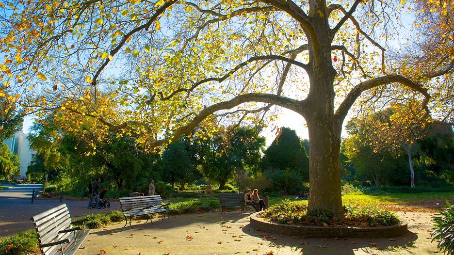 adelaide botanic gardens in adelaide  south australia