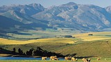 Caledon - Western Cape - South African Tourism