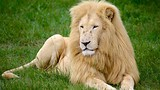 Lion Park - Johannesburg - Tourism Media