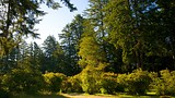 Azalea Park - South Oregon Coast - Tourism Media