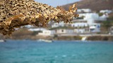 Ornos Bay - Mykonos - Tourism Media