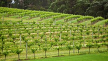 Cowaramup - Margaret River Wine Region