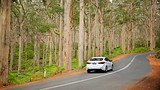 Boranup Karri Forest - Australia - Tourism Media