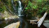 Hogarth Falls - West Coast Tasmania - Tourism Media