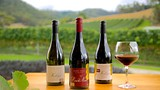 Home Hill Winery - Hobart - Tourism Media