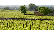 Bordeaux Wine Region - France