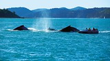 Showing item 29 of 90. Whitsunday Islands - Tourism and Events Queensland