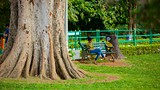 Lalbagh Botanical Gardens - Bengaluru - Tourism Media
