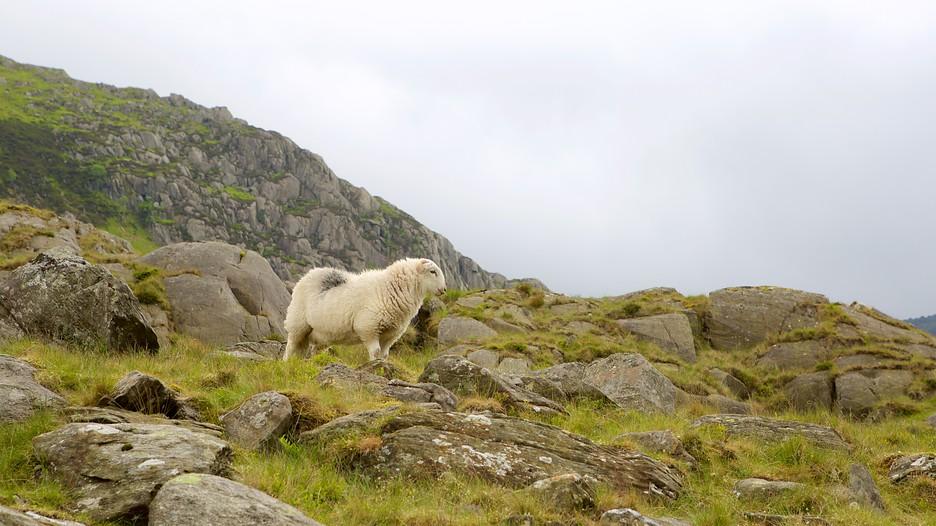 Snowdonia National Park Holidays Book Cheap Holidays To