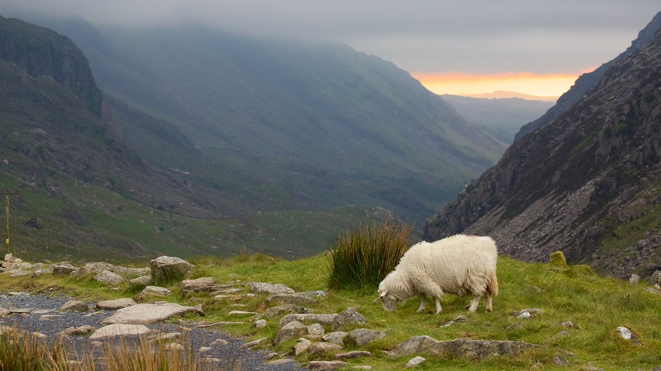 Snowdonia National Park Hotels