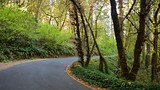 Hendricks Park - Eugene - Tourism Media