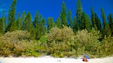 Showing item 52 of 89. Isle of Pines - New Caledonia - Tourism Media