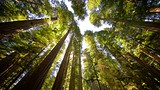 Boy Scout Tree Trail - Eureka - Tourism Media
