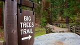 Big Trees Trail - Sequoia and Kings Canyon National Parks - Tourism Media