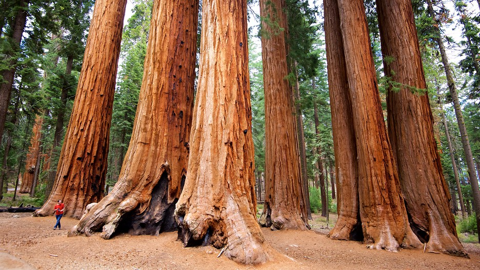 Sequoia National Park Tourism Media