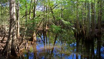Congaree National Park - Columbia