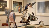 The Robert Bateman Centre - Vancouver Island - Tourism Media