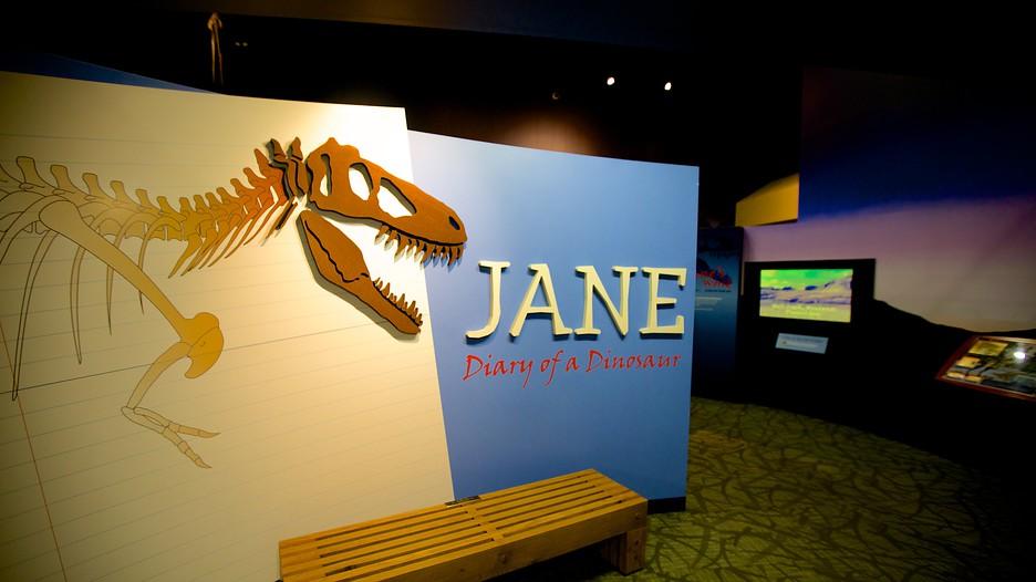 Rockford Natural History Museum