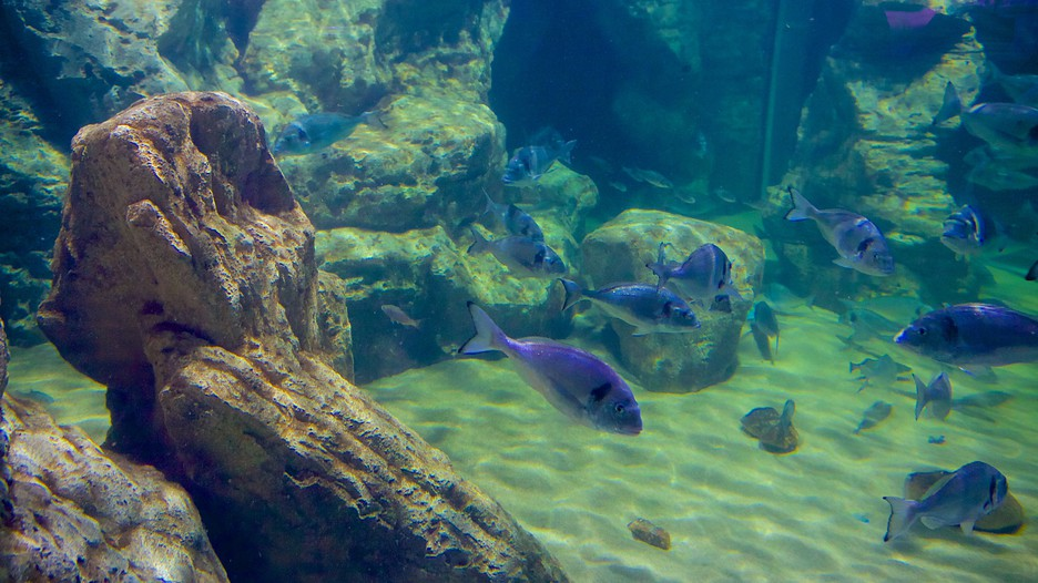 Malta National Aquarium - St. Pauls Bay - Tourism Media