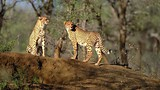 Kruger National Park - South African Tourism