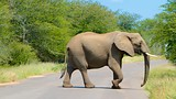 Kruger National Park - South Africa - Tourism Media