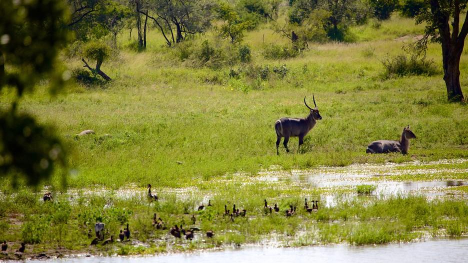Kruger National Park recap