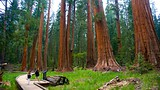 Big Trees Trail - Sequoia National Park - Tourism Media