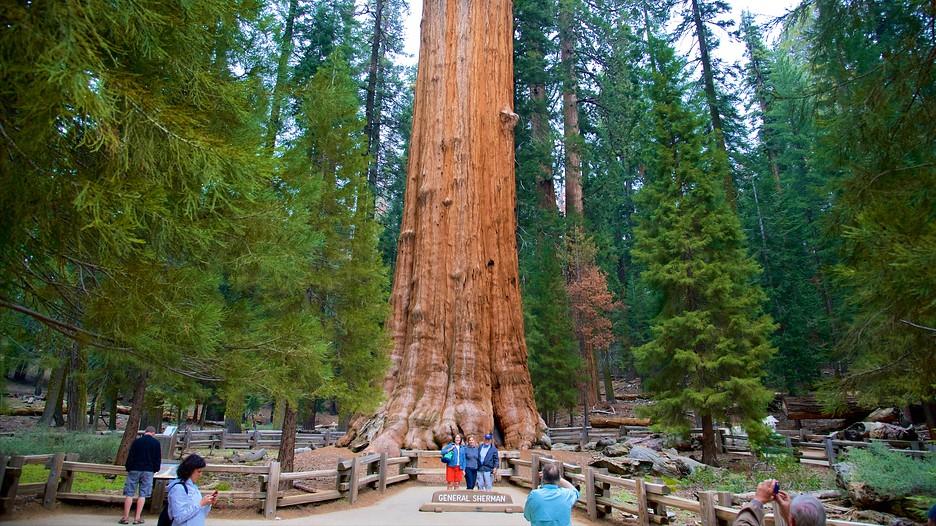 National Sequoia Park Hotel