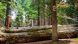 Sequoia National Park - Tourism Media