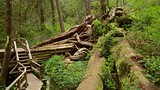 Rainforest Trail - Tofino (e dintorni) - Tourism Media