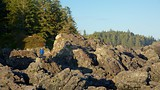 Wild Pacific Trail - Tofino (e dintorni) - Tourism Media