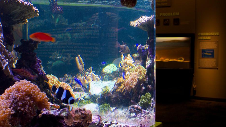 Acuario Birch Aquarium Informaci N De Acuario Birch
