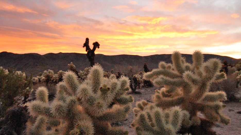 Joshua Tree National Park Vacations 2017 Package Amp Save