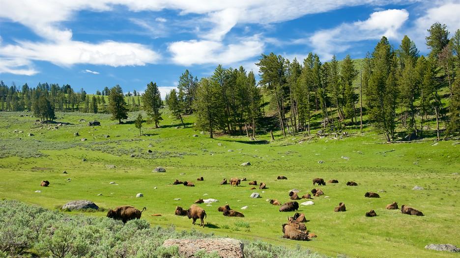Best deals yellowstone national park