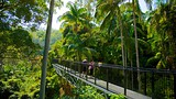 Showing item 61 of 64. Tamborine Rainforest Skywalk - Gold Coast - Tourism Media