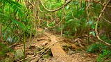 Tamborine National Park Palm Grove Section - Mount Tamborine - Tourism Media