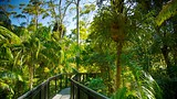 Tamborine Rainforest Skywalk - Mount Tamborine - Tourism Media