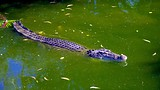 Crocodylus Park - Darwin - Tourism Media