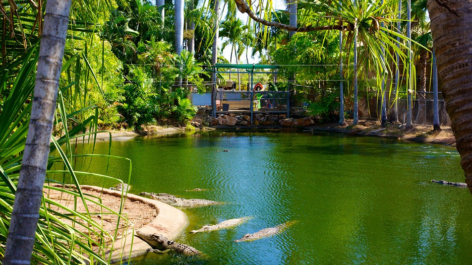 how to get to crocodylus park from darwin