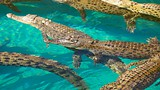 Crocosaurus Cove - Australia - Tourism Media