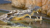 Crocosaurus Cove - Darwin - Tourism Media